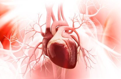 Coenzym Q10 im Herzen